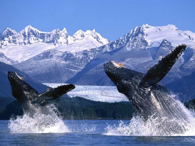 rozlehlá a krásná Aljaška