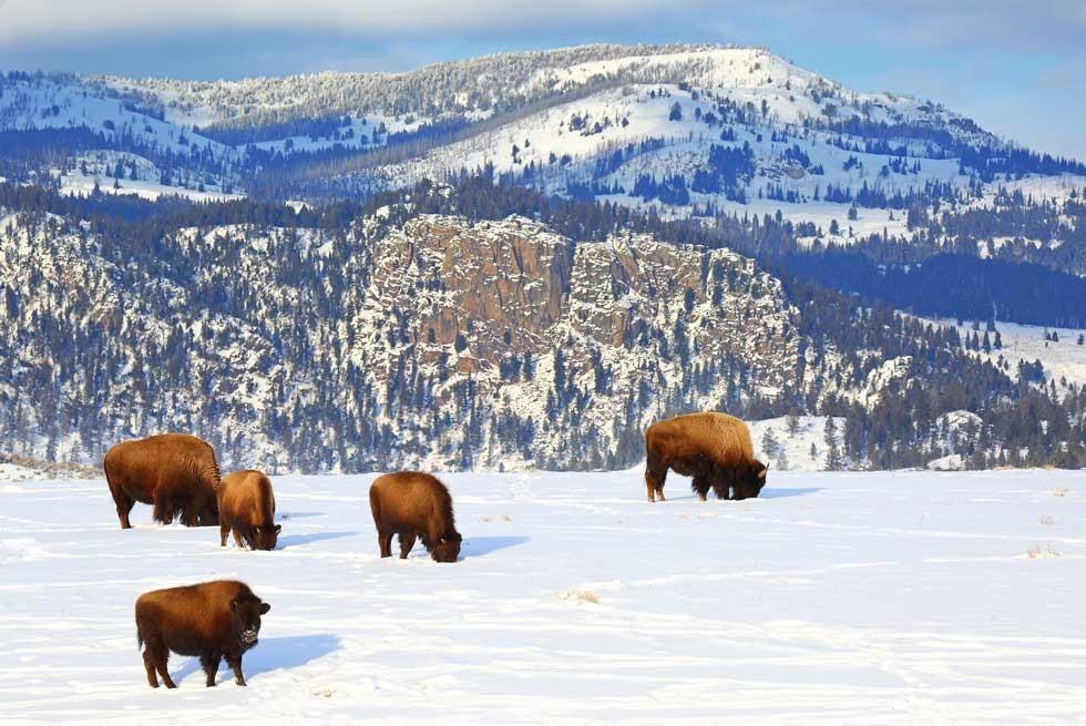 sníh v Yellowstonském národním parku