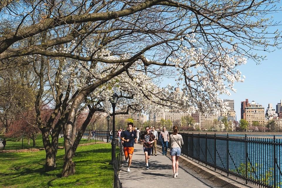 jarní scenérie s rozkvetlými stromy v USA