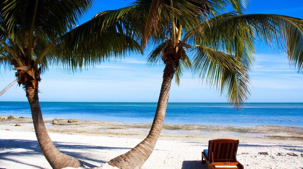 bílá pláž a palmy na pobřeží Severní Ameriky